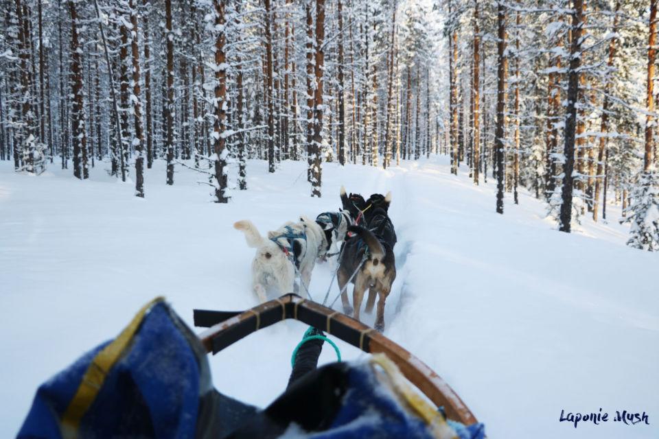 Laponie mush carnets nordiques Maison de la scandinavie et des pays nordiques