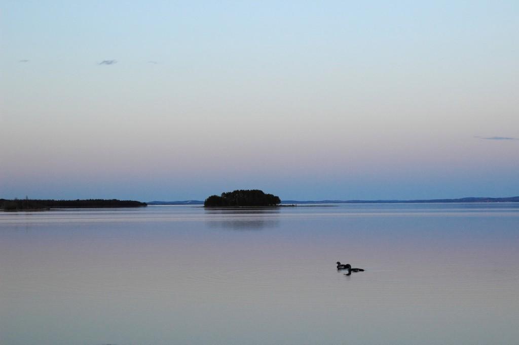Faune du lac Siljan, Dalarna, Suède