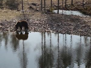 Parc aux ours, Orsa, Dalécarlie