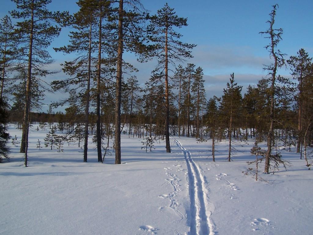 Ski rando Laponie Junosuando