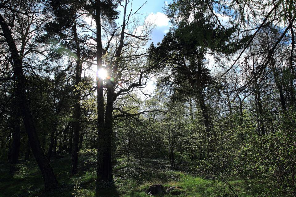 Promenade à Djugården
