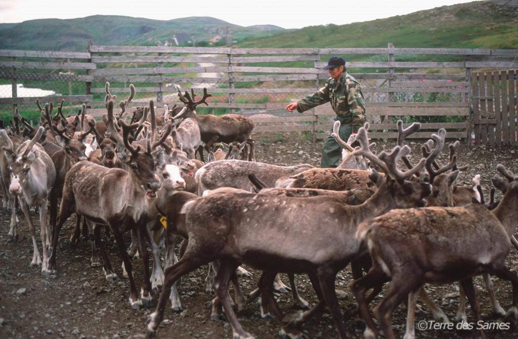 Les Sames et les rennes