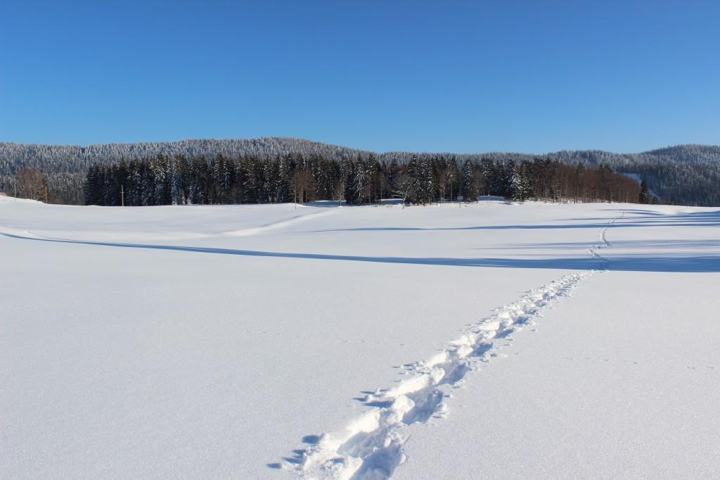 Pas dans la neige de Bellefontaine