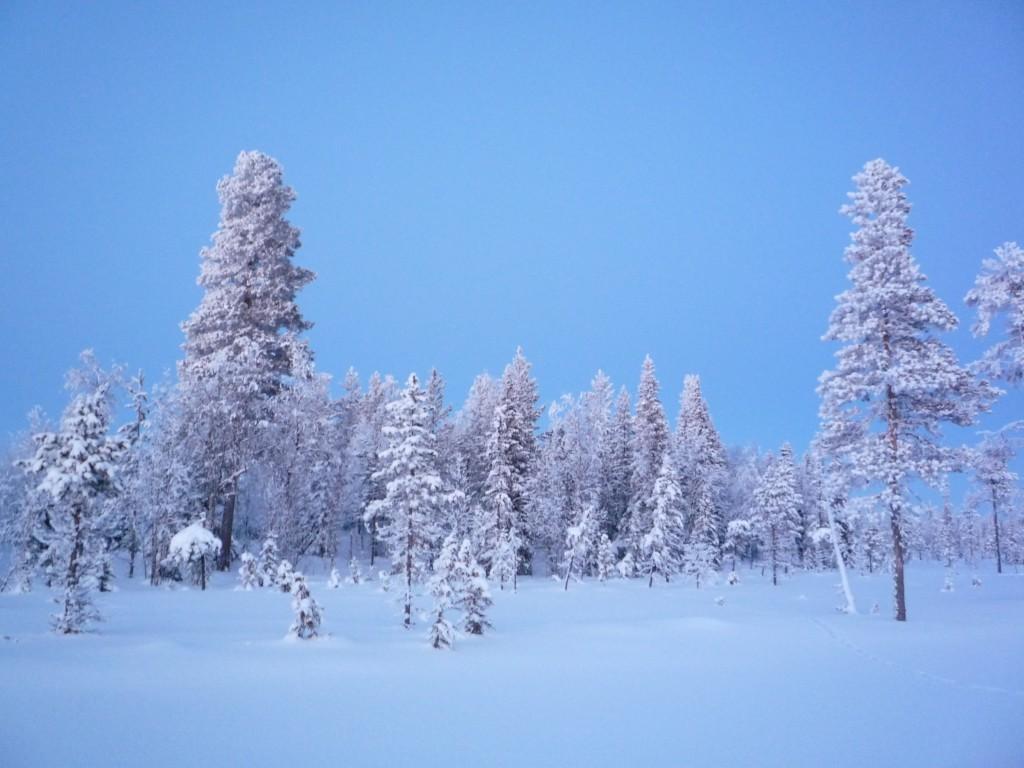 Crepuscule en Laponie
