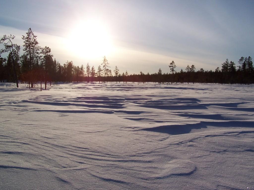 Marecages en Laponie en hiver