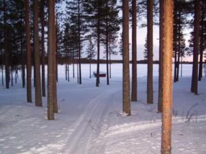Forêt de Laponie