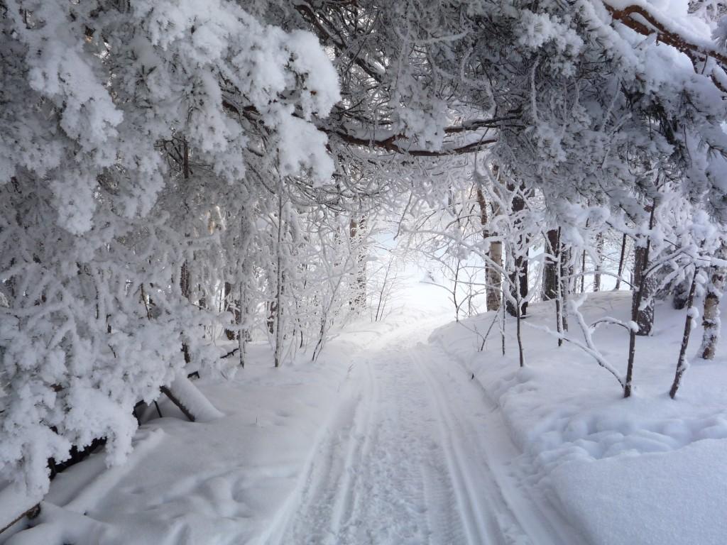 Chemin dans la neige sous bois enneigé