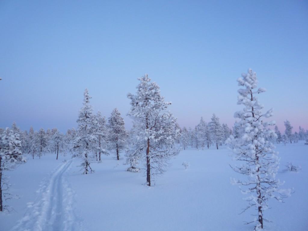 traces au crepuscule dans la neige
