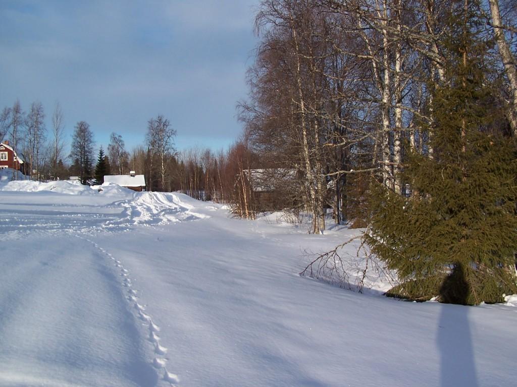 traces d'animaux laponie neige