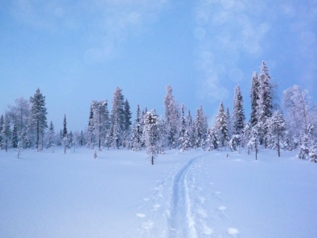 traces neige crepuscule
