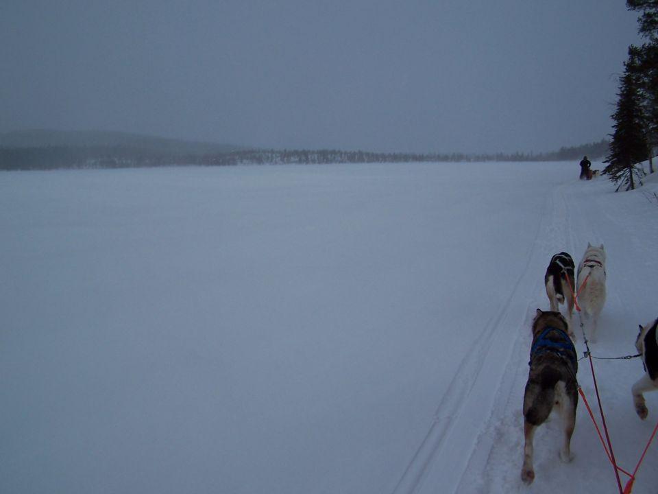 Chiens de traineau sur le bord du lac en Laponie