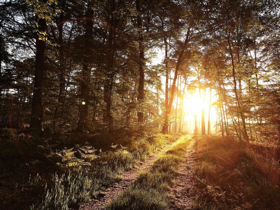 Forêt de Fontainebleau Running trail