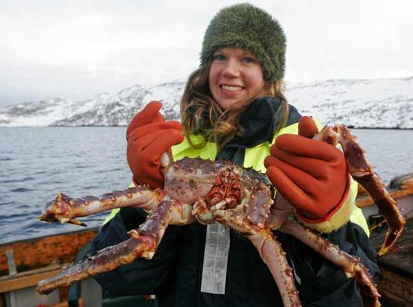Pêche au crabe géants norvégiens à Mehamn
