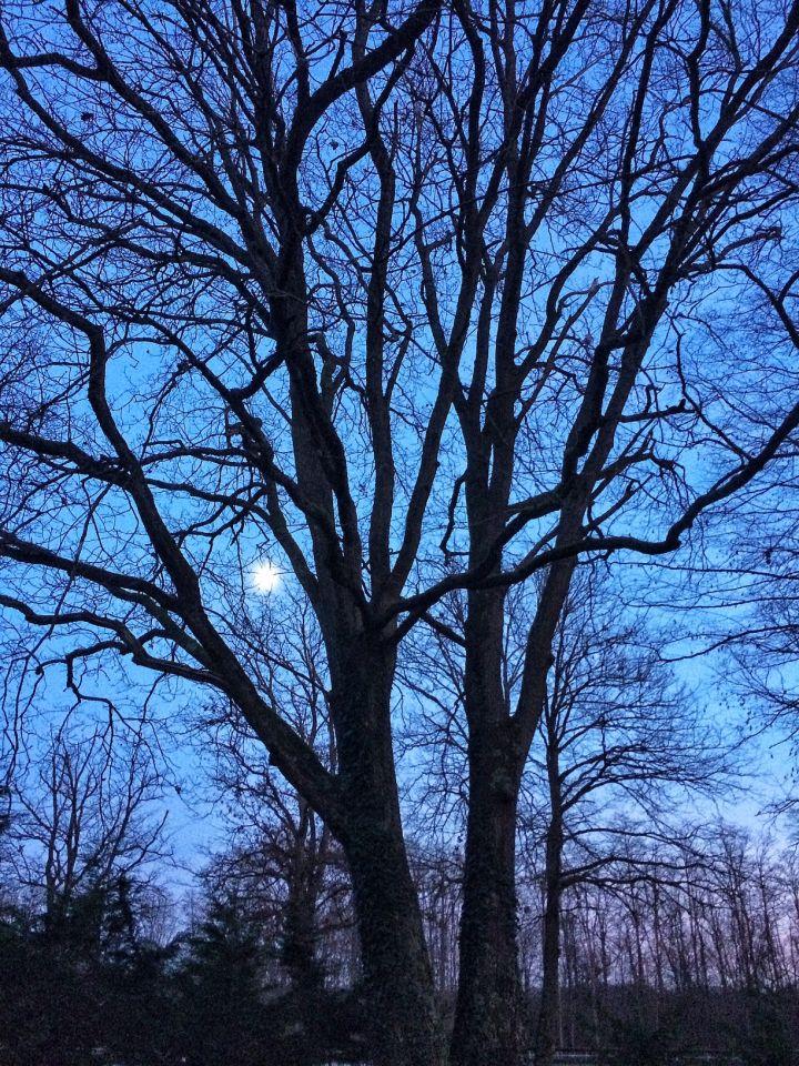 Lune dans la foret