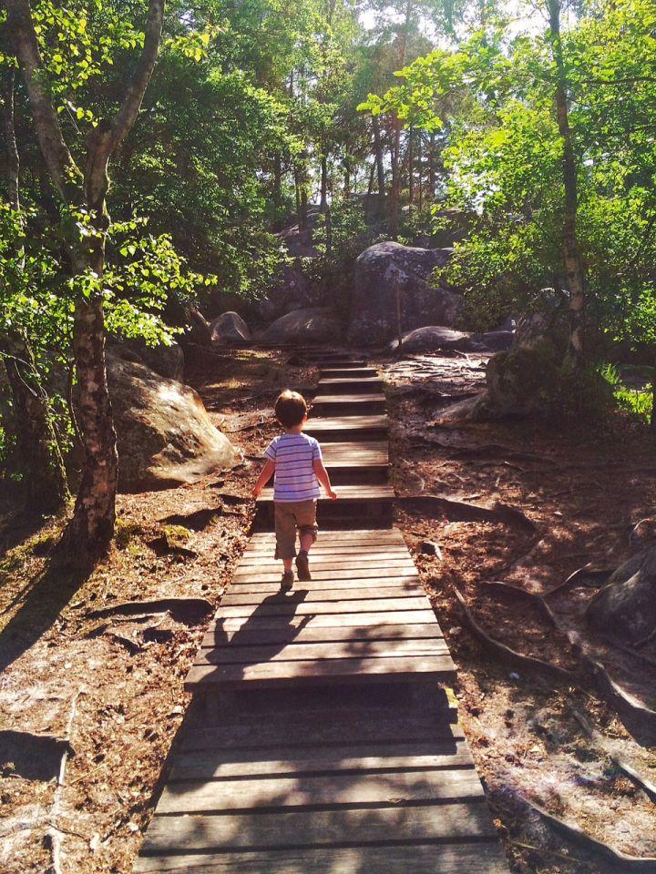 Rocher Canon en Forêt de Fontainebleau