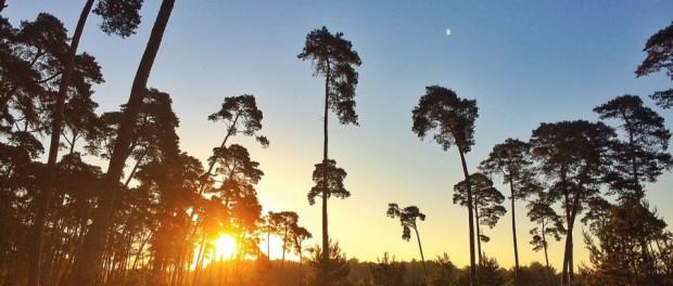 Foret de Fontainebleau trail