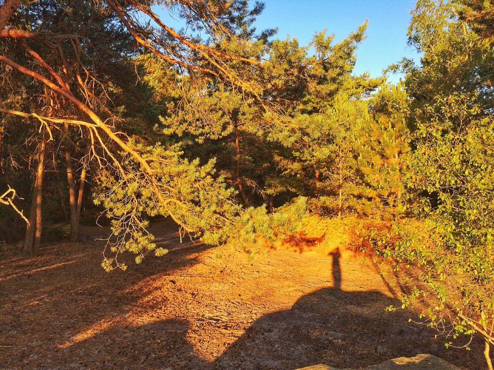 Rocher cassepot foret de fontainebleau trail running