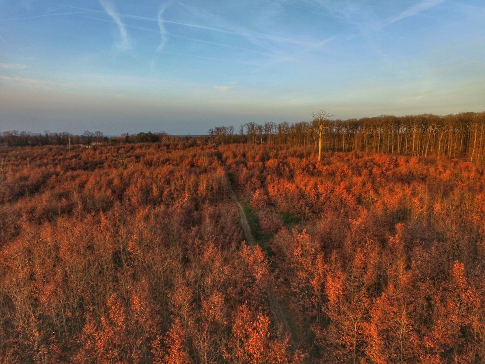 drone dji chemin bois le roi