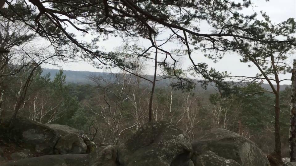 Point de vue forêt de Fontaineblau