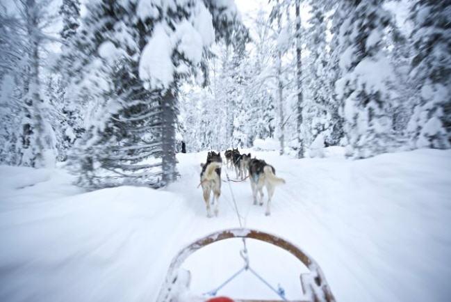 finlande raid en chiens de traineau